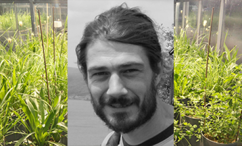 Grégoire Freschet explores the relationship between biodiversity and ecosystem functioning