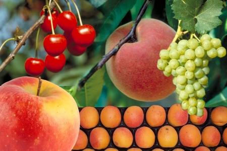 Conférence-débat « Les fruits, toujours bons pour la santé et l'environnement ? »