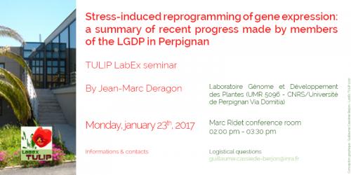 Résumé des travaux récents menés au LGDP