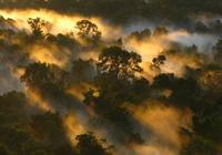 Canopée de la forêt amazionienne à l'aube, Brésil. – © Peter van der Sleen