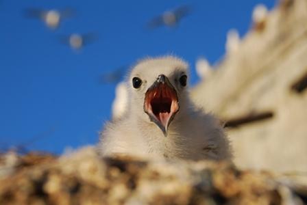 Birds help understanding Life