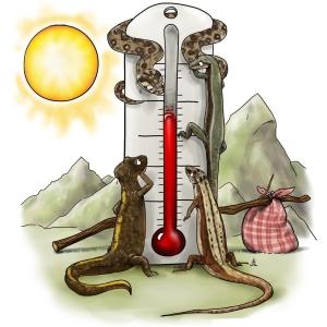 ECTOPYR : les ectothermes pyrénéens indicateurs du changement climatique