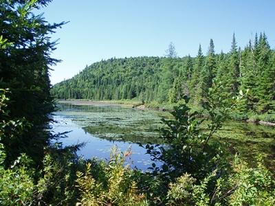 Effets combinés du réchauffement climatique et de la fragmentation de l'habitat sur la biodiversité