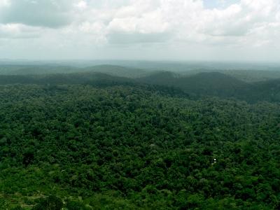Hyper dominance du cycle de carbone Amazonien