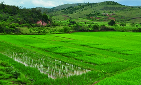 The genome dynamics of rice revealed by sequencing 3,000 varieties