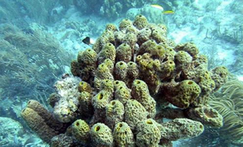 Le réseau du microbiome des éponges marines assemblé