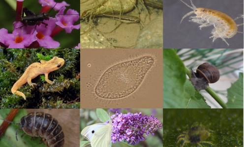 Les déterminants de la dispersion sont-ils généralisables entre les espèces ?