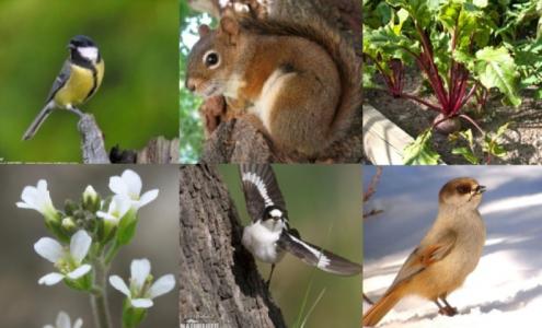 Notre capacité à prédire l'évolution d'adaptation est très limitée dans les populations naturelles