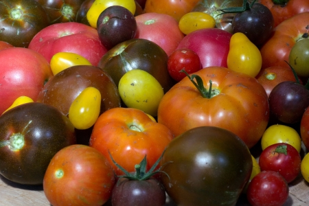 TomGEM : European Union founds research on tomato