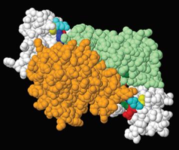 Un nouveau mécanisme de régulation de l'expression génique chez les plantes en réponse au stress ?