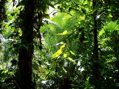 Une relation entre la stabilité d'une population ou d'un écosystème et l'aire considérée